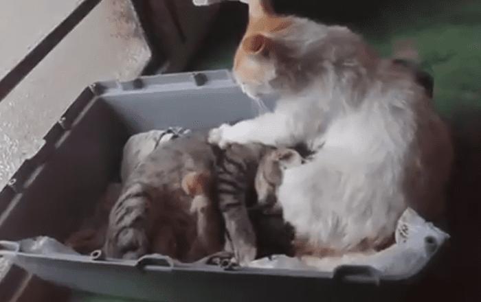 بالفيديو...قط يثير ضجة بسبب رد فعله بعد ولادة زوجته